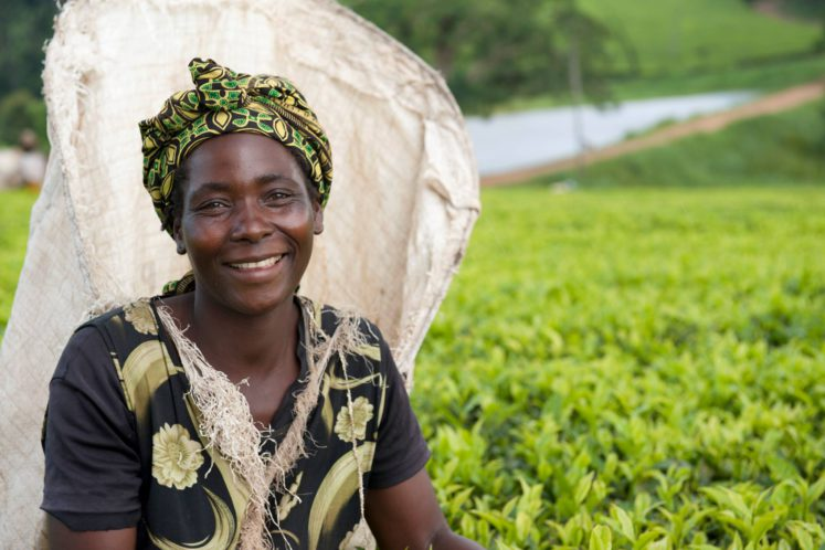 Satemwa Tea Estate is een duurzame thee producten in Malawi die voor internationale certificiering gaat