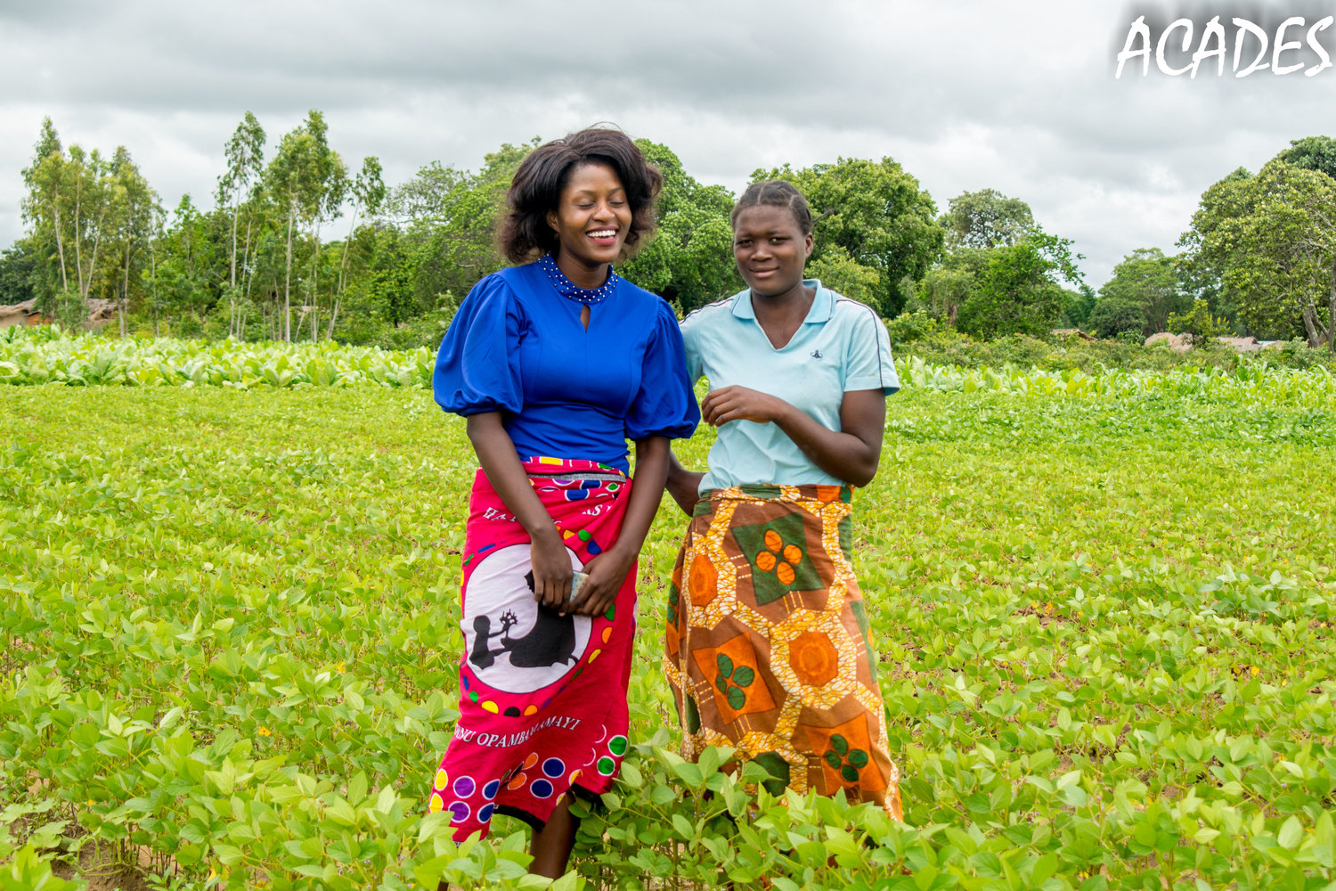 commercial-agriculture-for-young-farmers